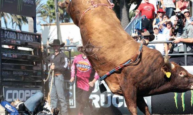 Local stock contractor's bull chosen for PBR World Finals
