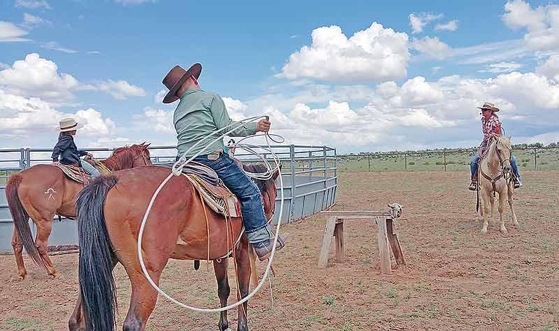 No horsing around here