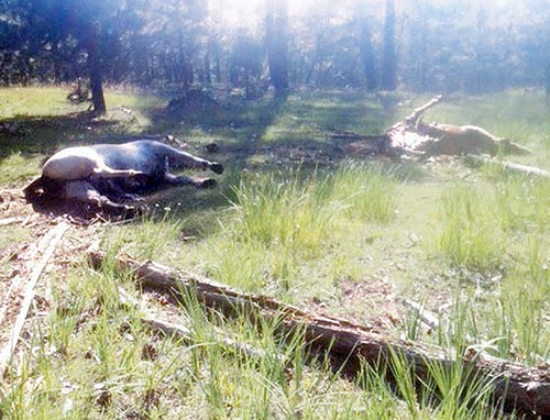 Officials investigate killing of 11 horses in Chooshgai Mountains