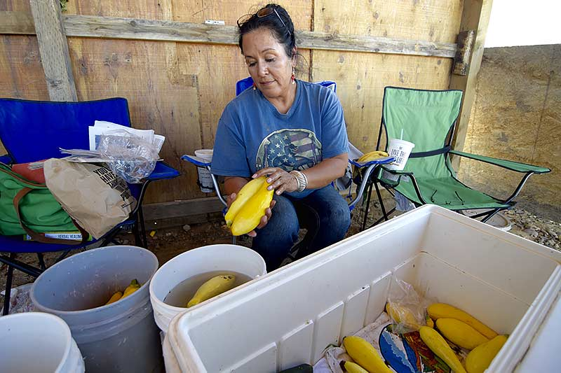 Sherrell Mesa moistures her squash at her sale booth Thursday in Hogback, N.M. EPA Administrator Gina McCarthy the EPA had set aside $500,000 to bring water to Navajo farmers along the San Juan. (Times photo - Donovan Quintero)