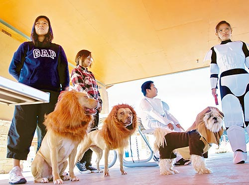 """Navajo Times   Krista Allen Latoyah Todecheene stands with her family of Star Wars buffs and 3-year-old pit bull terriers """"Kane,"""" (left) and """"Pork Chop,"""" (right) that were dressed as lions and 4-year-old """"Roxy,"""" a curly coat dog that was dressed as Ewok on Oct. 31 during the Kayenta Animal Care Center's Howl-O-Winnie dog event."""