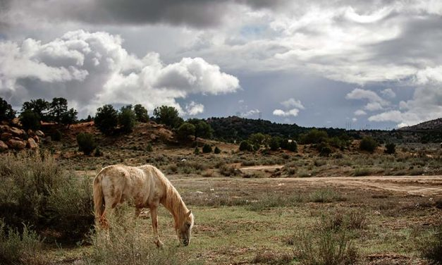 Fish and Wildlife may propose a horse hunt on the Navajo Nation