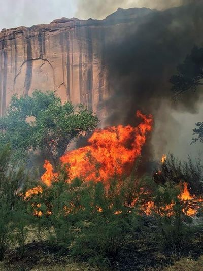 Fire creeps up wall of canyon.