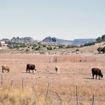 Letters: Ag Dept. does not help ranchers