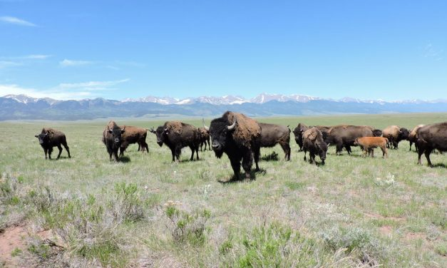 Letters: We need water, not ranch with bison