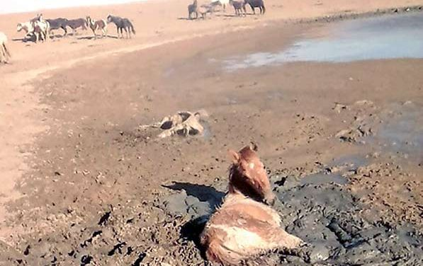 Hunt canceled, feral horses a growing problem