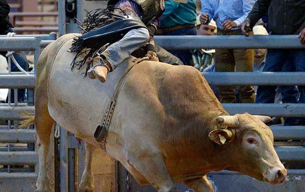 Crowd favorite, cowboy draw Wild Thing set for big show