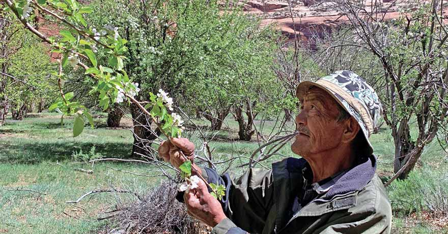 A fruitful legacy: In Canyon del Muerto, an unlikely orchardist keeps his heritage alive
