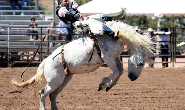 'An amazing feeling':  3 Diné cowboys win Ariz. state high-school championships