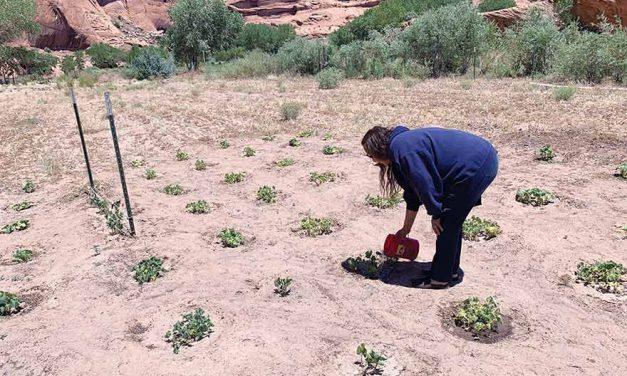 Few Diné farmers eligible for debt relief
