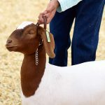 4-H champ not selfish with secrets for success