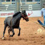 Novice NTUA team electrifies crowd at wild horse race