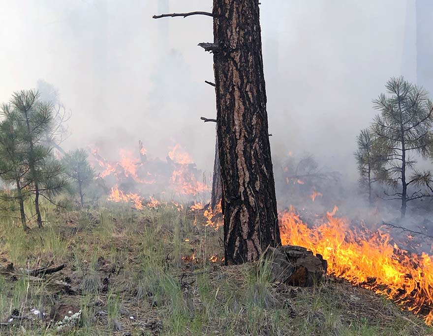 Flames nip at trees and grass on ground