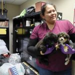 Navajo vet program finding homes for pups, kittens
