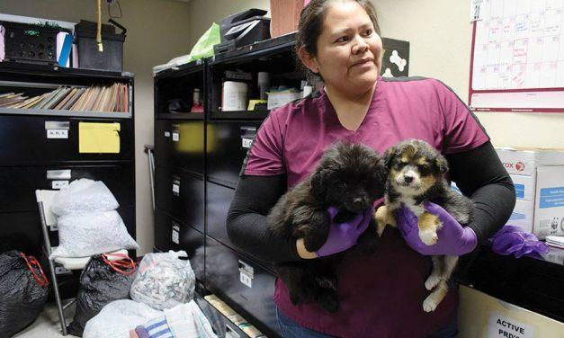 Navajo vet program finding homes for pups, kittens