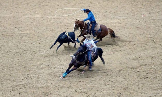 Riding it out:  COVID throws rodeo season for a loop