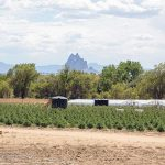 Hemp farm neighbors complain of smell, lights, use of water