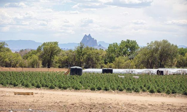 Injunction issued against hemp farms