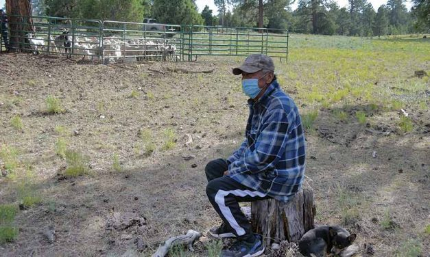 'Where the fire started': 65-year-old sheepherder evacuates with herd