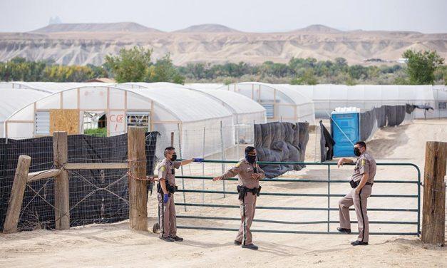 Police start shutting down hemp farms
