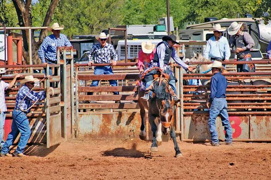 Locals win average titles in high school rodeo