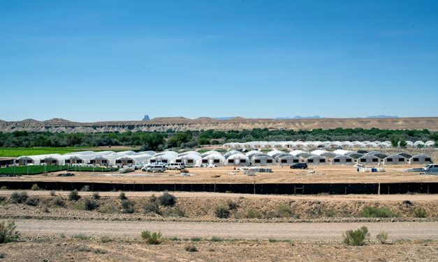 Chaos and cannabis:  A massive hemp empire is accused of growing illegal marijuana and sowing violence on the Navajo reservation