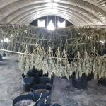 Letters: Marijuana farmers failed to mention 4 points