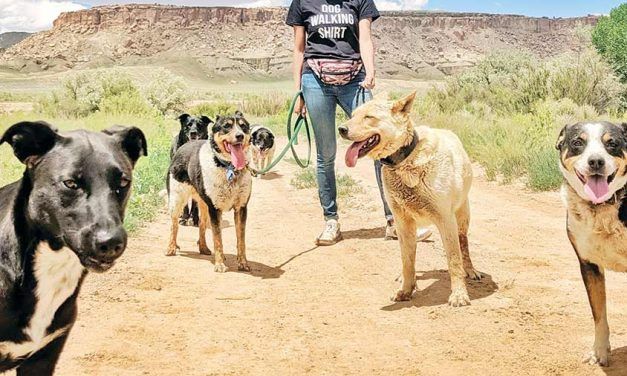 'You see them everywhere': Couple works to remedy rez's stray dog problem